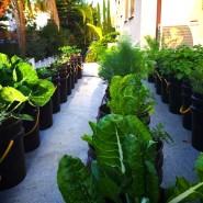 גג חניה של בית פרטי בהוד השרון מנוצל לגידול מזון במיכלי פתיל