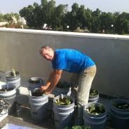 הקמת גינת מאכל על גג משפחה ברמת גן