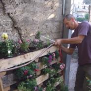 בנית קיר ירוק מחומרים זמינים ופשוטים