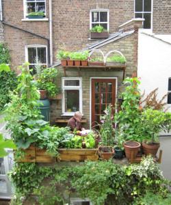 ניצול מקסימלי של שטח עירוני קטן במרפסת לגידול מזון ונוי