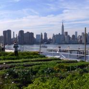 חוות הגרנג' בברוקלין