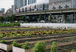 פרויקט SOLE Food בונקובר, קנדה