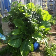 ערוגת חבית בשילוב קומפוסטר תולעים בגינה הקהילתית בנוה שאנן, תל אביבי