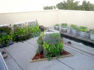 גינת גג של משפחה ברמת גן - שבועיים אחרי ההקמה