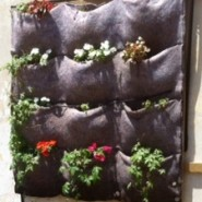 גרין כיס תלוי בחווה החקלאית חינוכית גן כרמית